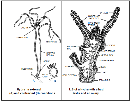hydra parts and functions