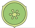 NCERT Solutions - Chapter 5: Morphology of Flowering Plants, Class 11, Biology | EduRev Notes