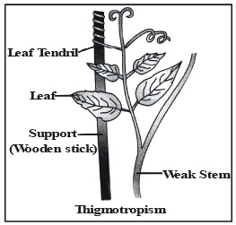 Coordination in Plants - Control and Coordination, Class 10, Science | EduRev Notes