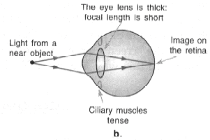 The Human Eye Class 10 Notes | EduRev