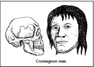 Evolution of Man NEET Notes   EduRev