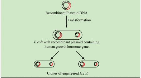 NCERT Solutions - Biotechnology And Its Applications NEET Notes | EduRev