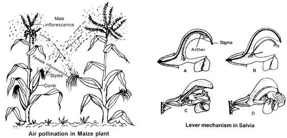 Sexual Reproduction In Flowering Plants  Chapter Notes