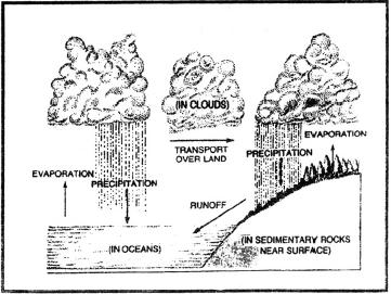 ecosystem, biology