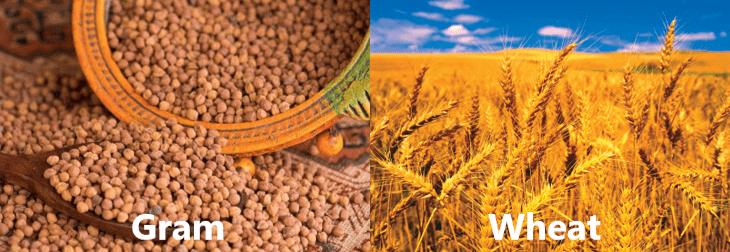 NCERT Solutions - Crop Production & Management Class 8 Notes   EduRev