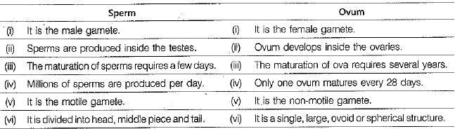 Sample Question Paper (2019-20) - 6 Notes | EduRev