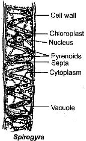 NCERT Exemplar - Diversity in Living Organisms Class 9 Notes | EduRev