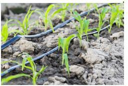 Long Answer Question - Crop Production And Management Notes | EduRev