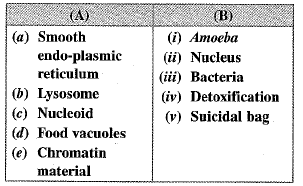 NCERT Exemplar - Cell - The Fundamental Unit of Life Class 9 Notes   EduRev