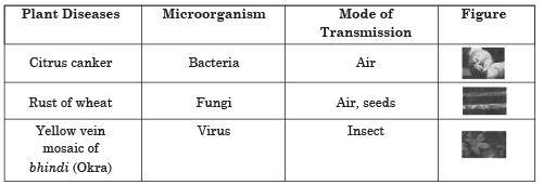 Long Answer Questions - Microorganisms : Friend And Foe Class 8 Notes | EduRev