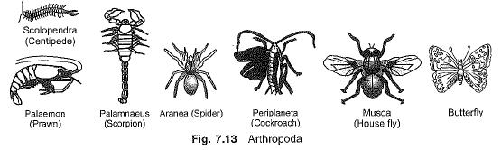 Chapter Notes - Diversity in Living Organisms Class 9 Notes | EduRev