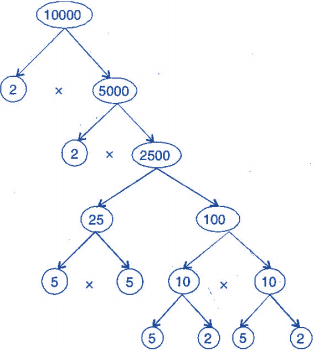 NCERT Solutions(Part - 2) - Playing with Numbers Class 6 Notes | EduRev