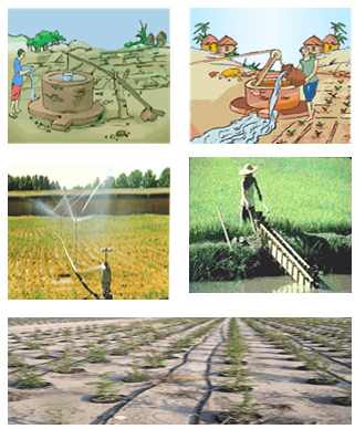 Very Short Questions - Crop Production And Management Class 8 Notes | EduRev