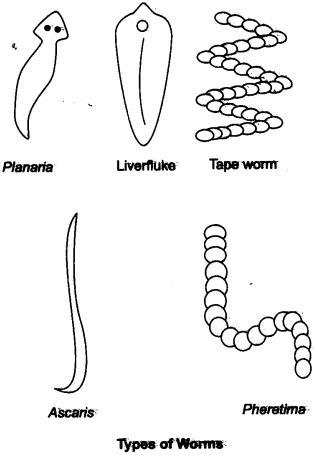 Short & Long Answer Questions- Diversity in Living Organisms Class 9 Notes | EduRev
