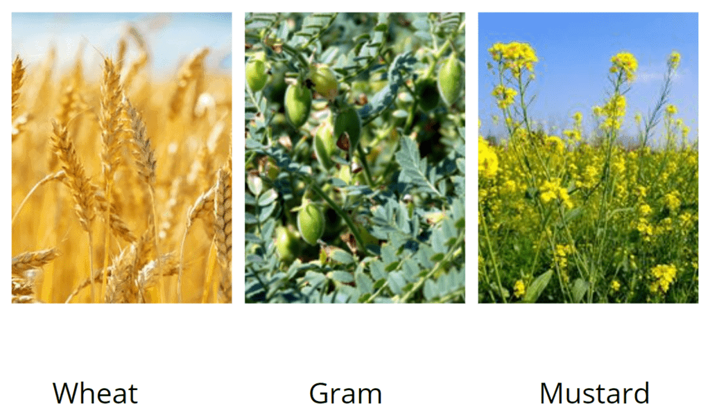 Chapter Notes - Crop Production and Management Class 8 Notes | EduRev