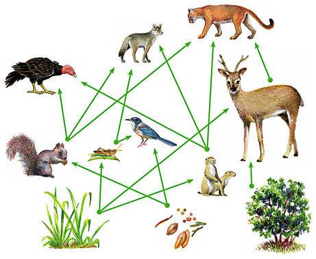 Ecosystem and Food Chain Class 10 Notes | EduRev