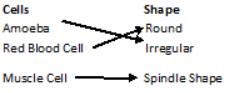 Short Answer Questions - Cell : Structure and Functions Class 8 Notes | EduRev