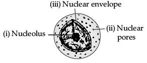 Sample Question Paper (2020-21) - 2 Class 9 Notes   EduRev