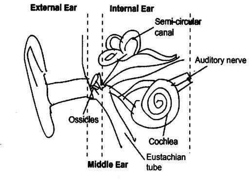 Short Long Answer Questions- Sound Class 9 Notes | EduRev