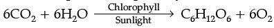 Sample Question Paper (2020-21) - 4 Class 10 Notes | EduRev