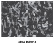 Short Answer Questions (Part - 2) - Microorganisms : Friend And Foe Notes | EduRev