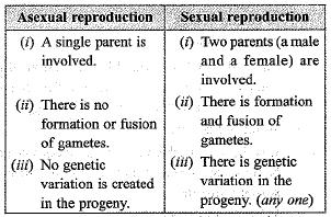 Previous Year Questions - How do Organisms Reproduce? Class 10 Notes   EduRev