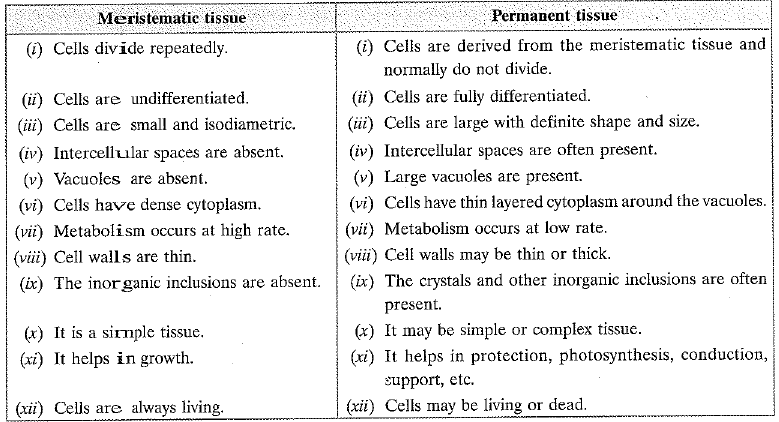 NCERT Exemplar - Tissues Class 9 Notes | EduRev