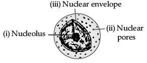 Sample Question Paper (2020-21) - 3 Class 9 Notes | EduRev