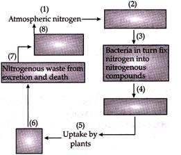 Class 8 Science Sample Paper - 3 Class 8 Notes | EduRev