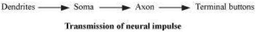 NCERT Solutions - The Bases of Human Behaviour Humanities/Arts Notes   EduRev