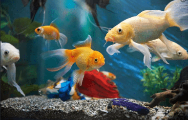Chapter Notes - The Fish Tale Notes | EduRev