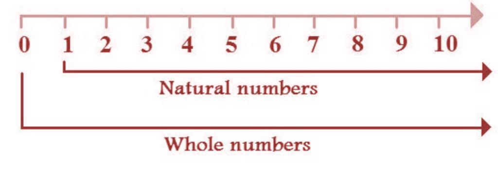 Natural Numbers Class 6 Notes | EduRev