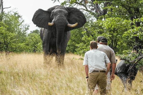 Wildlife Conversation Class 8 Notes | EduRev