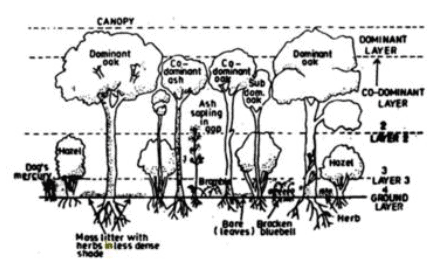 Chapter - 3 - Plant Communities and Major Vegetation; Environment and Disaster Management UPSC Notes | EduRev