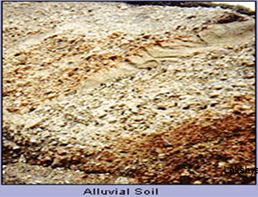 Soils in India - Geography, UPSC, IAS UPSC Notes   EduRev