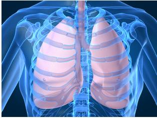 Respiratory System - Notes, Biology, IAS UPSC Notes   EduRev