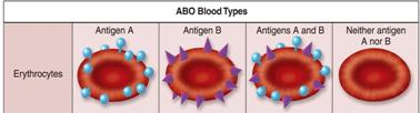 Blood - Notes, Biology, IAS UPSC Notes | EduRev