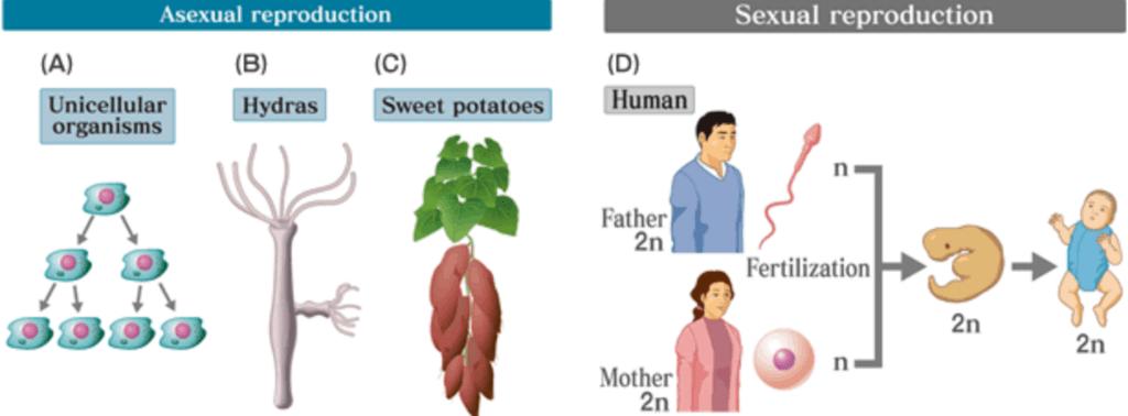 Characteristics of Living Organisms NEET Notes | EduRev