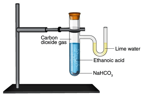 NCERT Exemplar - Carbon and its Compounds Notes   EduRev