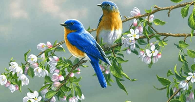 Short Questions - हम पंछी उन्मुक्त गगन के Class 7 Notes | EduRev