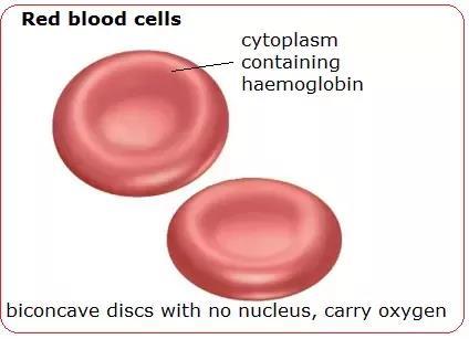 NCERT Summary: Summary of Biology- 5 UPSC Notes | EduRev