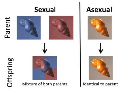 Doc: Male Reproductive System NEET Notes | EduRev