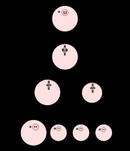 NCERT Solutions- Human Reproduction NEET Notes | EduRev