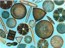 Introduction to Chrysophytes NEET Notes | EduRev