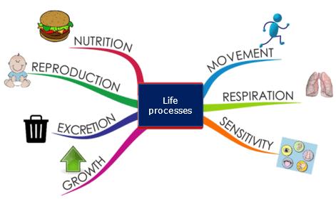 Life Processes Class 10 Notes | EduRev