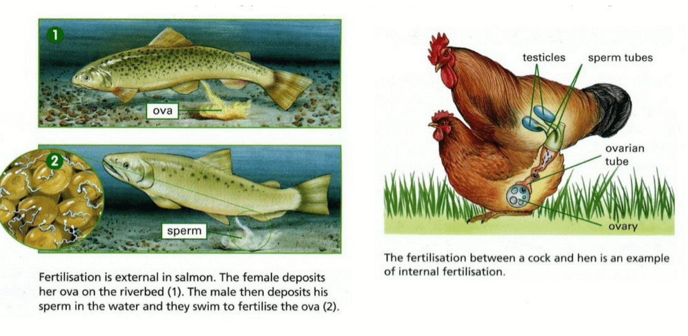 Fertilization: Introduction and its Types NEET Notes | EduRev