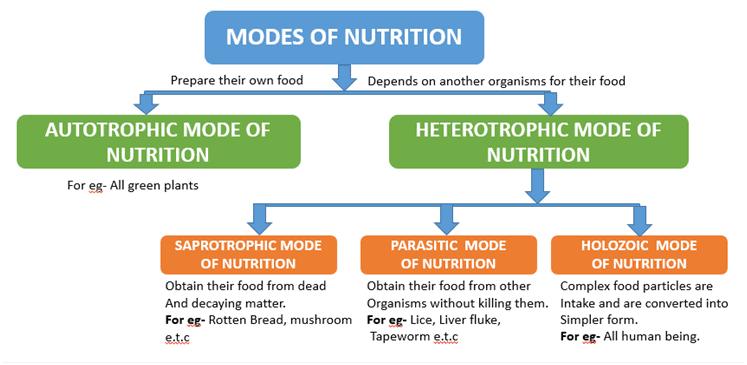 Overview of Life Processes (part -1) Class 10 Notes | EduRev