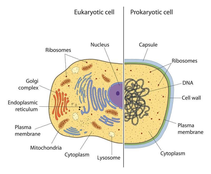 NCERT Summary: Gist of Biology - 1 Notes | EduRev