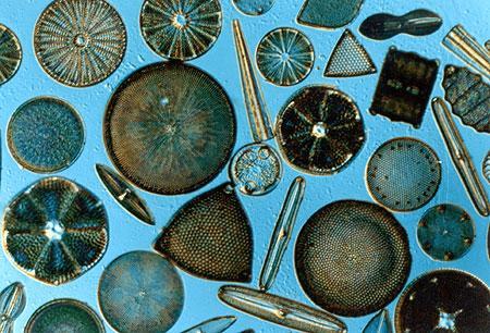 Doc: Dinoflagellates, Red Tides NEET Notes   EduRev