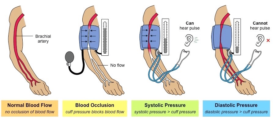 Blood Pressure and Lymphatic System Class 10 Notes | EduRev